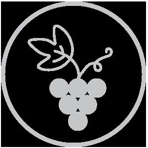 Variedad de viñedo